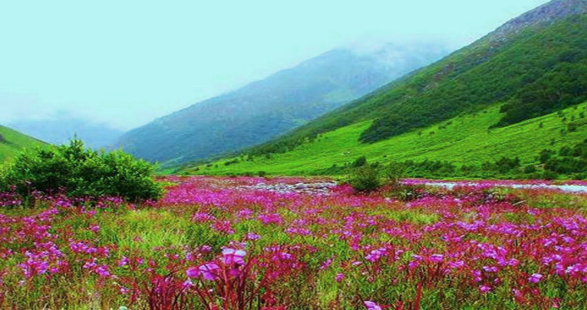 /Valley of flowers 1