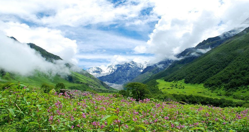 /Valley of Flowers Trek