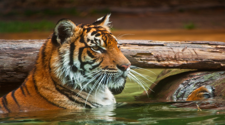 Bandhavgarh Wildlife Safari Tour From Ahmedabad