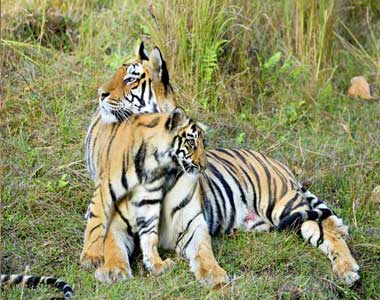 Bandhavgarh Wildlife Safari Tour From Pune