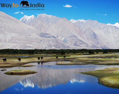 Best of Leh Ladakh