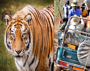 Golden Triangle With Ranthambore
