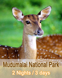 Mudumalai National Park Tour