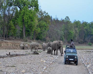 Rajaji National Park Tour