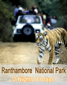 Ranthambore Wildlife Safari Tour