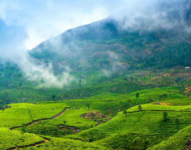 Ooty Kodaikanal Munnar Tour Package