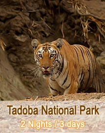 Tadoba National Park Tour Package