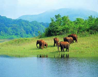 Thattekad Thekkady Sanctuary Tour